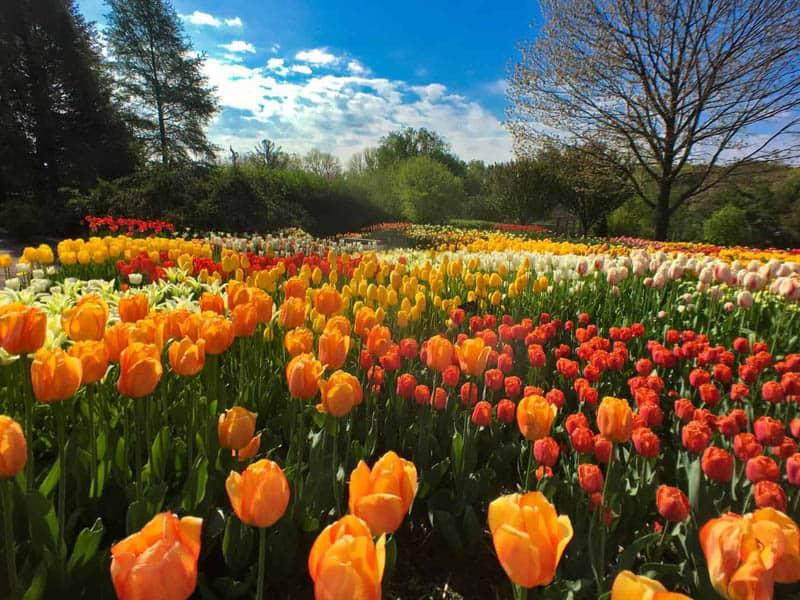 Vivid Colors iPhone Photo Contest Winner