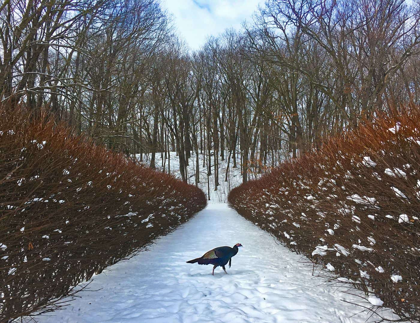 Nature iPhone Photo Contest Winner